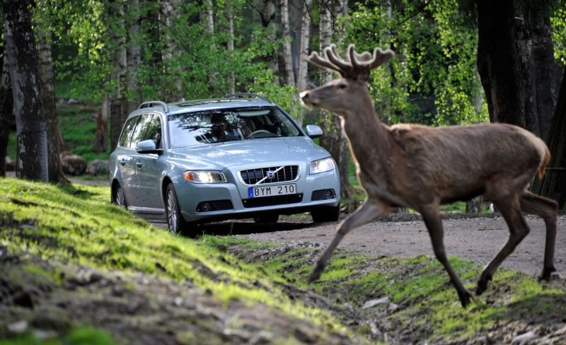 Volvo's New Pilot Assist II is Designed to Curtail Animal Collisions