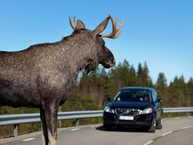 Autonomous Cars are Having Trouble With Animals