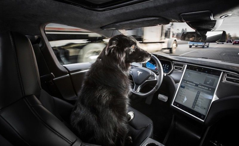Drivers Continue to be the Largest Problem with Autonomous Vehicles